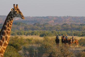 20 Daagse South African Explorer Kampeer Groepssafari