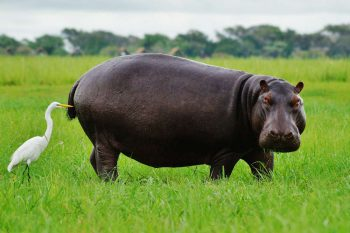 16 Daagse Zimbabwe En Botswana Game Trail Kampeer Groepssafari