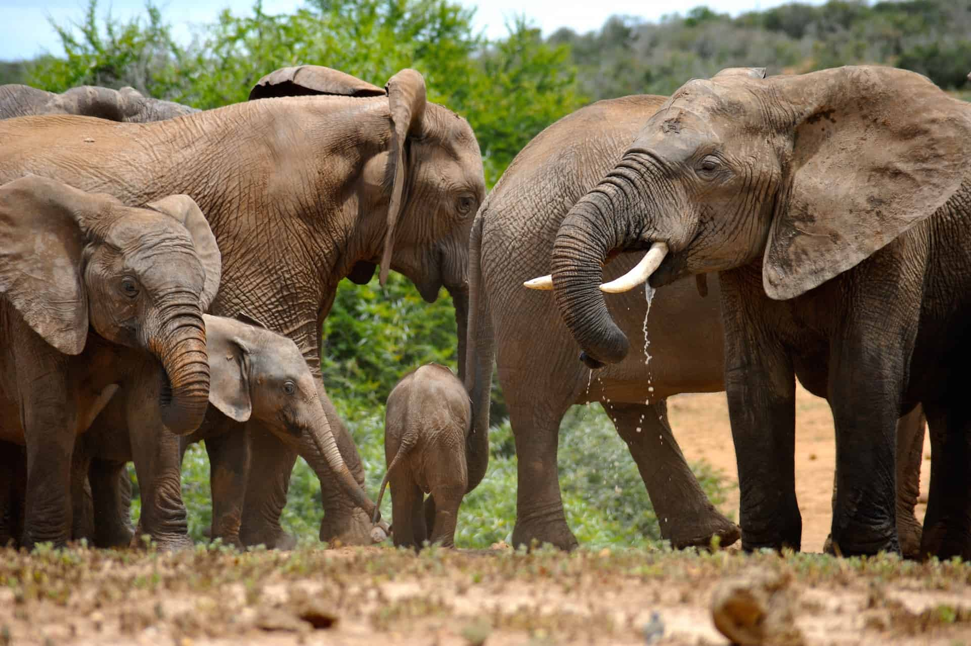 Waterhole Met Olifanten Addo Elephant Park