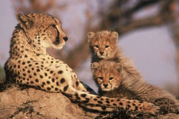7 Daagse Tanzania Trails Tented Camp En Lodge Groepssafari
