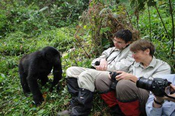 14 Daagse Maasai Mara En Gorilla's Lodge Comfort Groepssafari