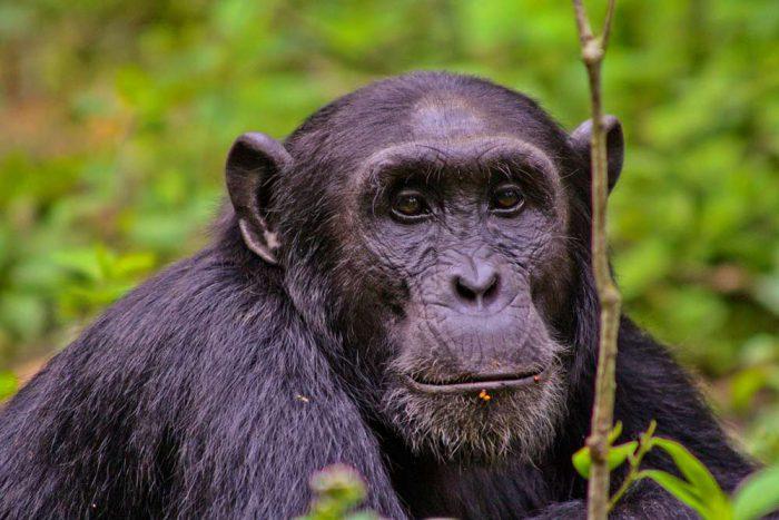 15 daagse prive rondreis ontdek Oeganda