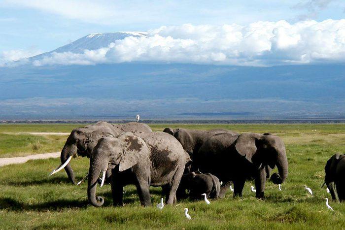 8 daagse highlights of Tanzania Prive lodge safari reis