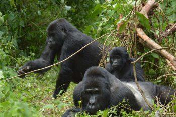 23 Daagse Actief En Cultureel Oeganda Prive Lodge Safari