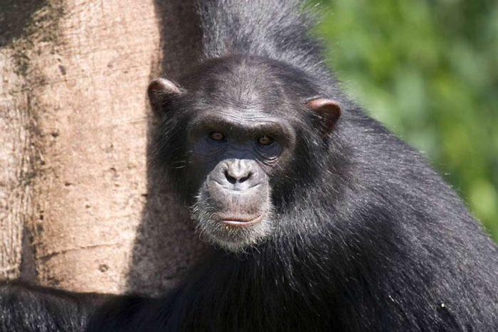 """20 daagse """"Parel van Afrika"""" Oeganda prive lodge safarireis"""