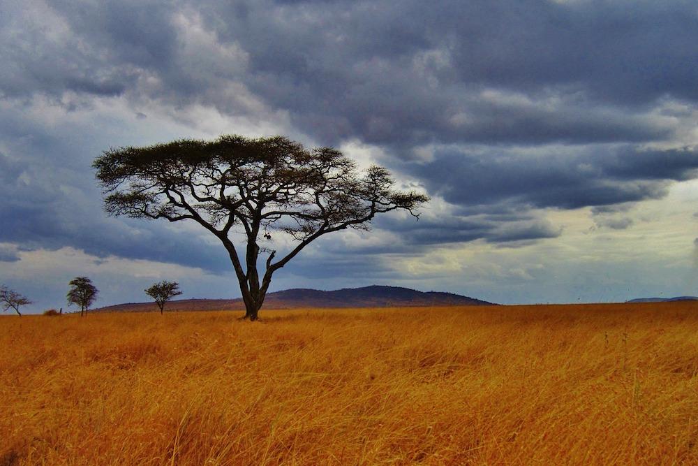 Op Safari In Tanzania Met Afrika Online