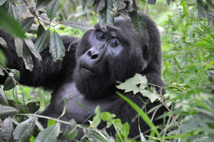 11 daagse de hoogtepunten van Oeganda groepssafari