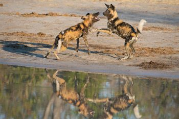 21 Daagse Namibia And Botswana Southern Circle Comfort Safari