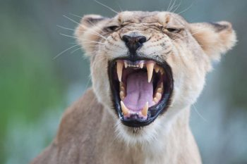 14 Daagse Botswana WILDSIDE Kampeer Groepssafari
