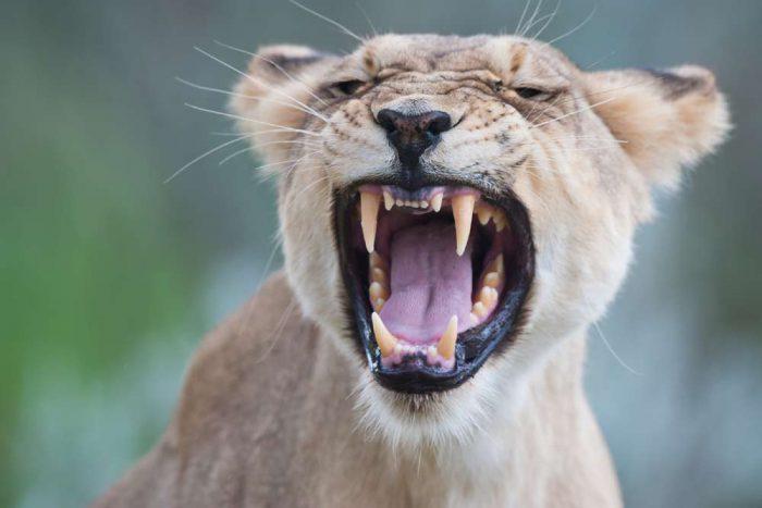 15 daagse Botswana WILDSIDE kampeer groepssafari