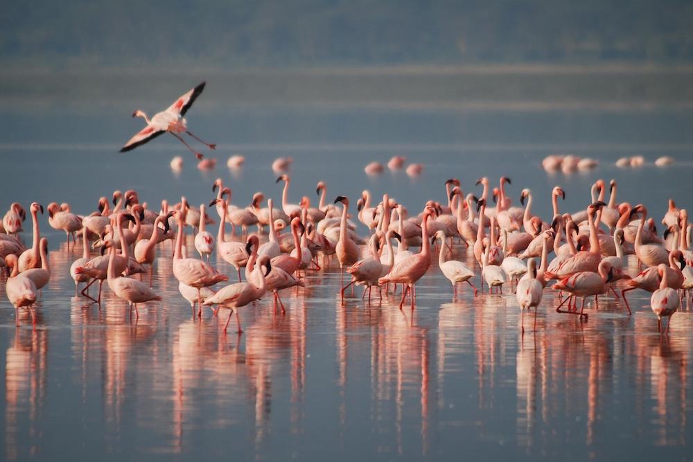 Bezoek Lake Manyara National Park Tijdens Een Tanzania Rondreis; Flamingo's Spotten
