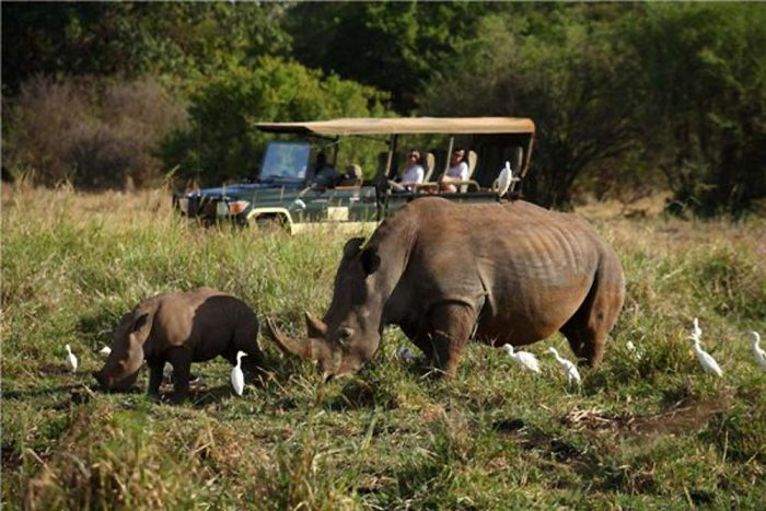 Game drive in Tanzania with Landcruiser 4x4wd