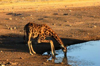 12 Daagse Kenia En Tanzania Wildlife Safari Kampeersafari