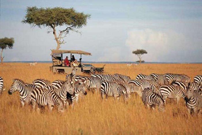Volle dag game driving in het Serengeti Park