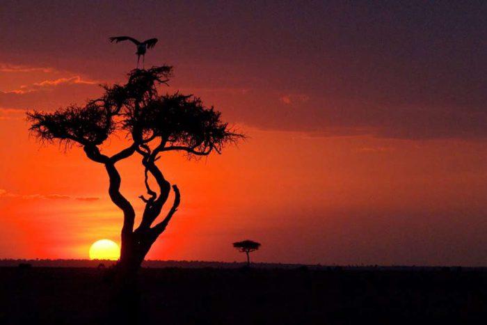 Sunset drive met een Marabou in de boom