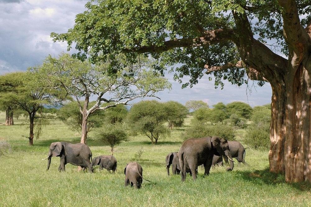 Goed Geregelde Tanzania Safari Met Afrika Online