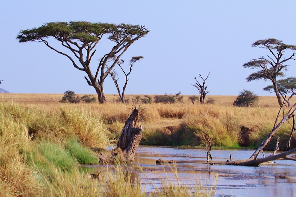 Safari Tanzania Serengeti
