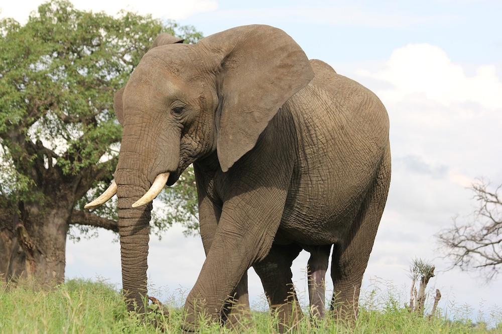 Reis Naar Tanzania Voor Het Bezoeken Van Tarangire Nationaal Park - Safari Tanzania
