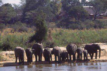 16 Daagse Zimbabwe En Botswana Game Tracker Comfort Groepssafari