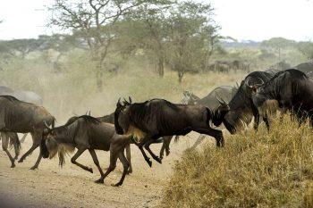 15 Daagse Oost Afrika Migratie Route Groepssafari Reis
