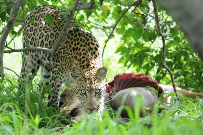 21 daagse Cape to Victoria Falls Grand Explorer Comfort groepsafari