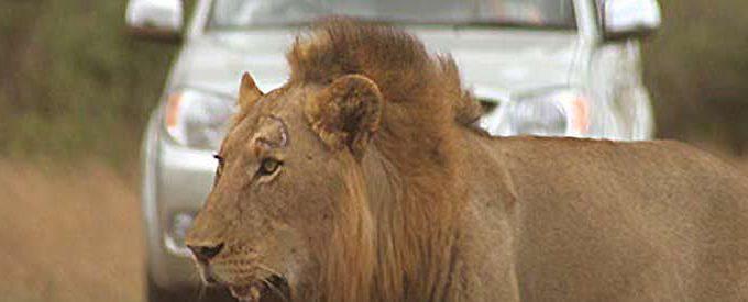 App Om Dieren Te Lokaliseren Krugerpark