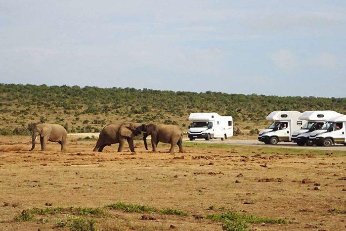 22 daagse camperrondreis Namibië Windhoek tot Windhoek