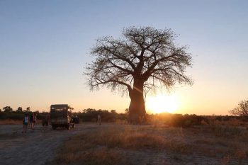 16 Daagse Botswana Wildlife Lodge Safari Reis