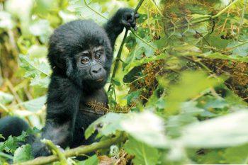13 Daagse Oeganda Wildlife Explorer Camping Safari