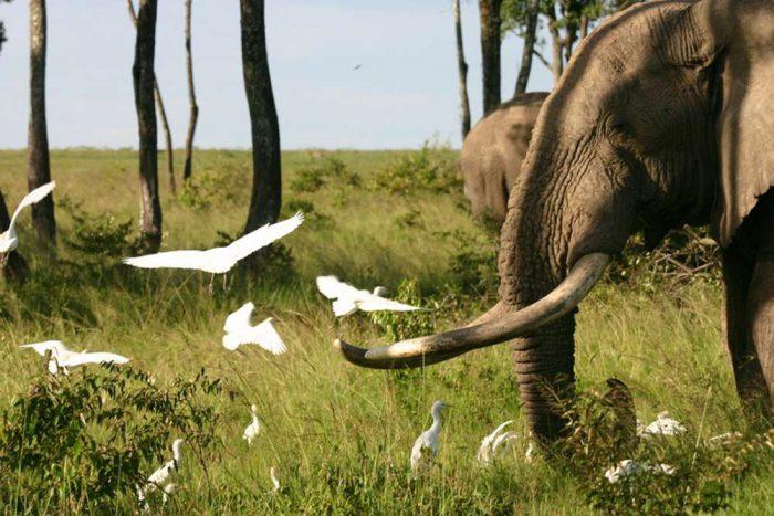 Tanzania Trails Tented Camp en Lodge groepssafari reis