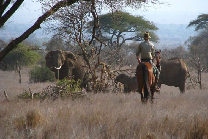 Safari paardrijden Manyara Ranch
