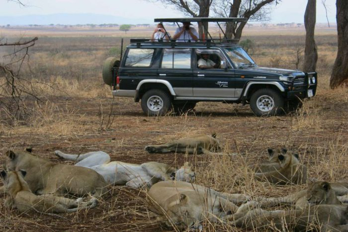 Op safari met de Prado 4x4 auto bij de leeuwen