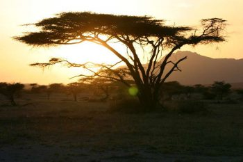 7 Daagse Kenia Trails Lodge En Tented Camp Prive Safari Reis