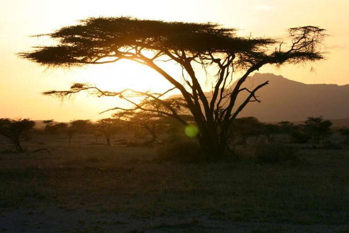 "7 DAAGSE ""KENIA TRAILS"" LODGE & TENTED CAMP PRIVE SAFARI"