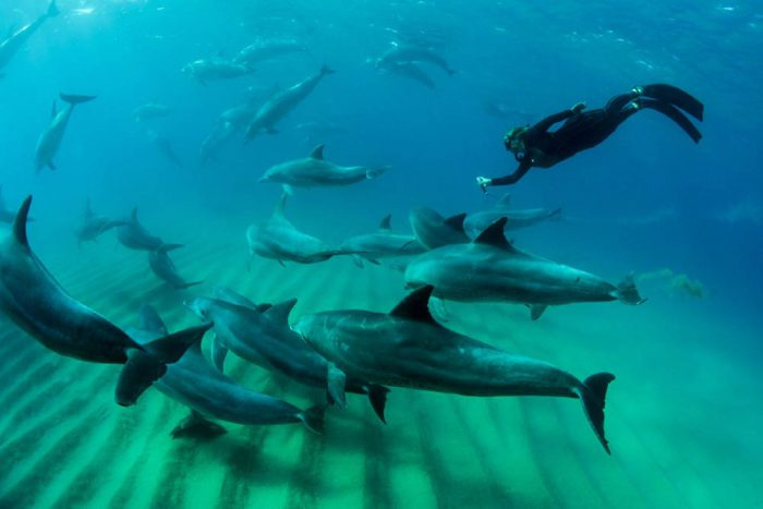 Mozambique Ponta Dolphin Encounters